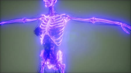 kosterní : Transparent Human Body with Visible Bones