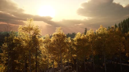 мифический : Sunlight in Forest at Sunset