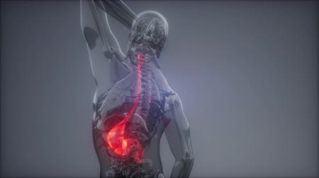 discomfort : Human Stomach Radiology Exam Stock Footage