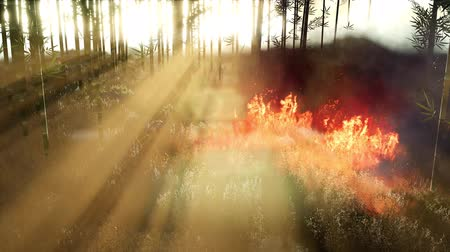 dead forest : Wind blowing on a flaming bamboo trees during a forest fire Stock Footage