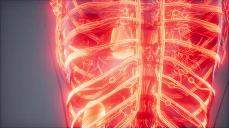 dokular : Blood Vessels of Human Body