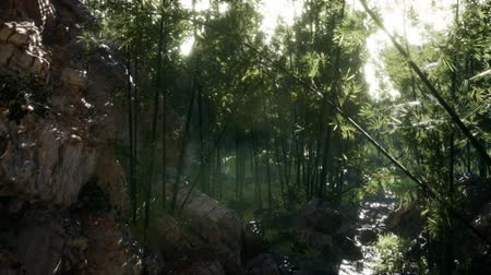 lágyság : Lush green leaves of bamboo near the shore of a pond with stones.