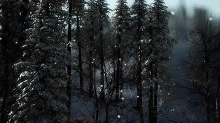 открытка : Misty fog in pine forest on mountain slopes