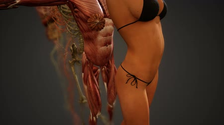 lekarstwa : Animated 3D human anatomy illustration Wideo