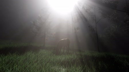 cervus elaphus : Deer Female in Forest in Fog