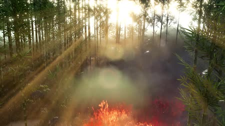 aflição : Wind blowing on a flaming bamboo trees during a forest fire Stock Footage