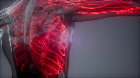 biomedica : Blood Vessels of Human Body
