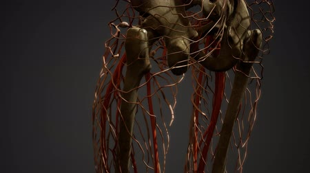 распад : Human body blood vessel anatomy Стоковые видеозаписи