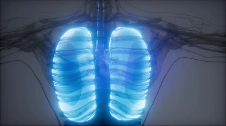 respiratory infection : Human Lungs Radiology Exam