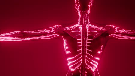 contraction : Blood Vessels of Human Body