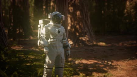 astronauta : lonely Astronaut in dark forest