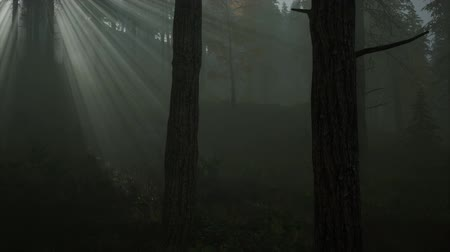 nightmare : Forest in Autumn Morning Mist
