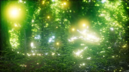 長時間露光 : Firefly Flying in the Forest