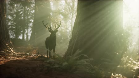 geyik : Beautiful deer in the forest with amazing lights at morning