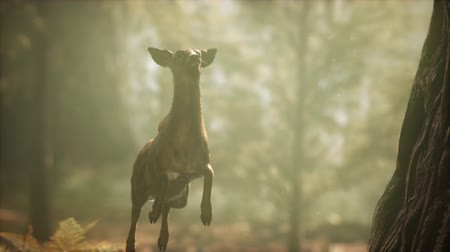 geyik : extreme slow motion deer jump in pine forest