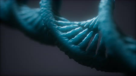 клон : loopable structure of the DNA double helix animation
