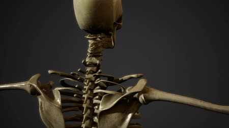 temporal : bones of the Human skeleton