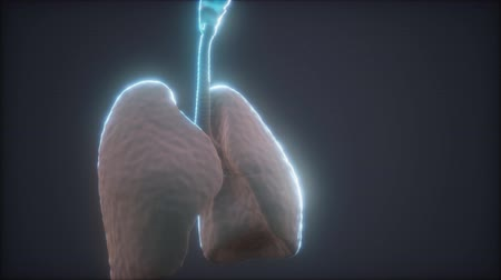 fyziologie : 3d animation of human lungs