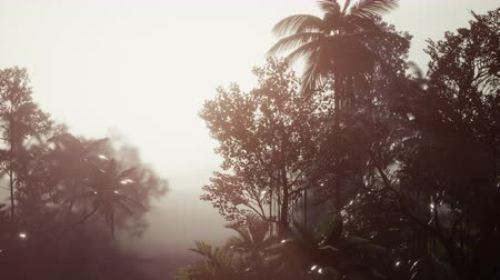 contorno : Tropical Palm Rainforest in Fog Stock Footage