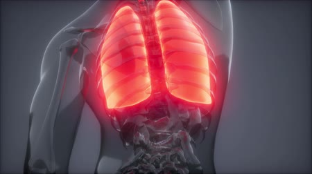 solidarita : Human Lungs Radiology Exam