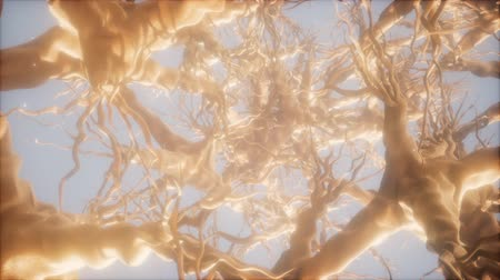 percepção : Journey through a neuron cell network inside the brain Stock Footage