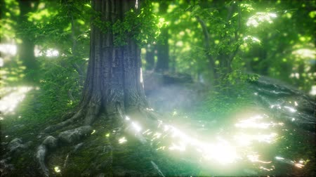 light rays : Scenic Forest of Fresh Green Deciduous Trees Framed by Leaves