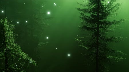 мрачный : Magical Forest with Sparkles Стоковые видеозаписи