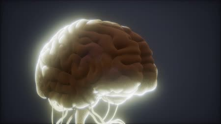 tomography : animated model of human brain