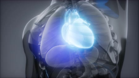 originell : Human Heart Radiology Exam