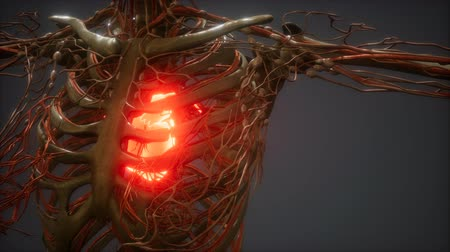 interno : CG Animation Of A Sick Human Heart Vídeos