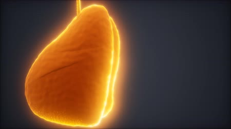 radiation : loop 3d rendered medically accurate animation of the human lung Stock Footage