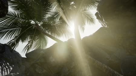 krzew : Big Palms in Stone Cave with Rays of Sunlight