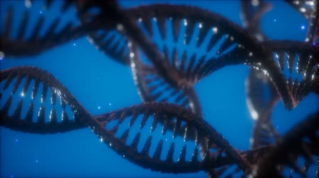 клон : structure of the DNA double helix animation