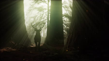 cervus elaphus : Beautiful deer in the forest with amazing lights at morning