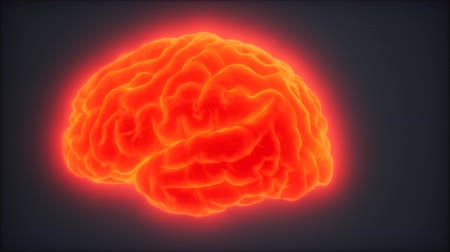 corteza : Animación de rotación del cerebro humano en bucle Archivo de Video
