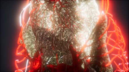 human heart : 3d rendered medically accurate animation of heart and blood vessels