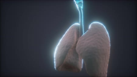 lung : 3d animation of human lungs