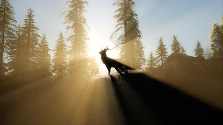 papel : Deer Male in Forest at Sunset