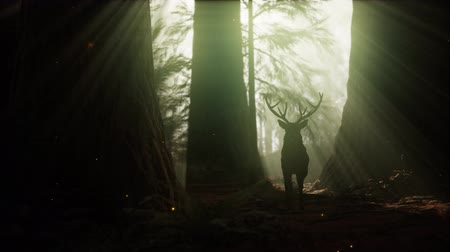 лань : Beautiful deer in the forest with amazing lights at morning