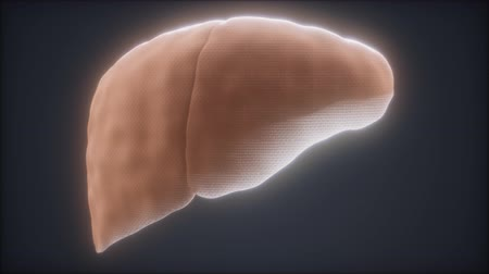 lef : loop 3d rendered medically accurate animation of the human liver