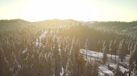szron : Winter Landscape Glowing by Sunlight in the Morning