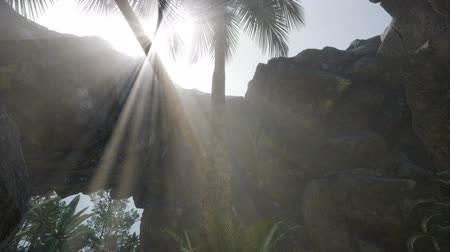 prehistorický : Big Palms in Stone Cave with Rays of Sunlight