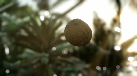 sea piece : extreme slow motion falling coconut in jungle