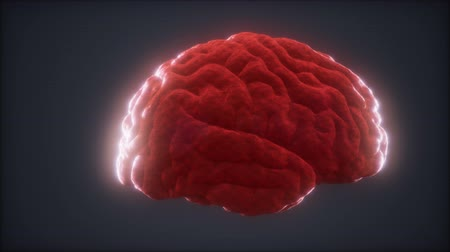 nerves : Loop Rotating Human Brain Animation