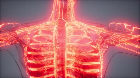 blood sport : Blood Vessels of Human Body