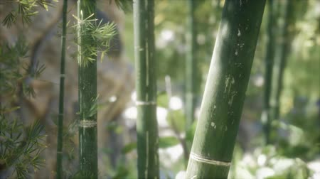 일본 패턴 : Green Bamboo trees forest background