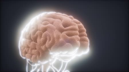 synapsen : animated model of human brain