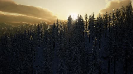 snowy background : Winter Landscape on a Sunset Stock Footage