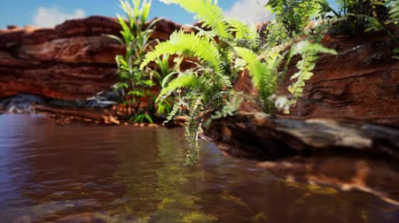 brazilian : tropical golden pond with rocks and green plants