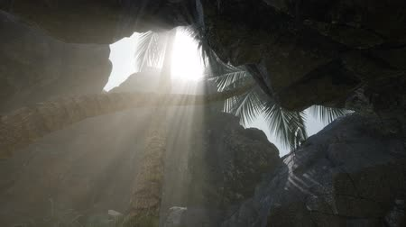 primitív : Big Palms in Stone Cave with Rays of Sunlight